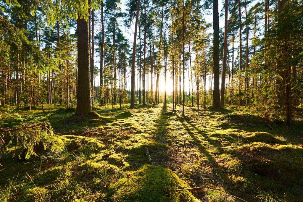 Επισκόπηση της εφαρμογής της περιβαλλοντικής νομοθεσίας: η Επιτροπή βοηθά τα κράτη μέλη να εφαρμόζουν καλύτερα τους περιβαλλοντικούς κανόνες της ΕΕ με σκοπό την προστασία των πολιτών και την αναβάθμιση της ποιότητας ζωής τους
